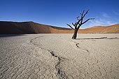 线条,死亡谷,索苏维来地区,纳米比诺克陆夫国家公园,纳米布沙漠,纳米比亚,非洲
