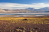高原,高度,上方,看,盐湖,泻湖,国家级保护区,阿塔卡马沙漠,安托法加斯塔大区,大,智利,南美
